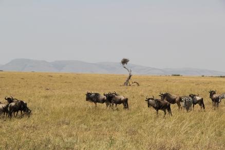 Kenyan landscape