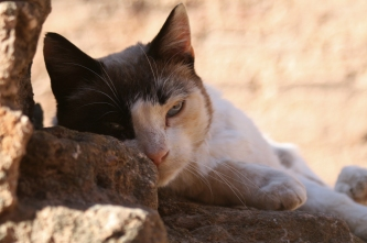 Moroccan stray