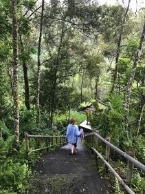 Bali jungle trail