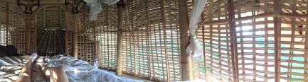 Bali bird's nest